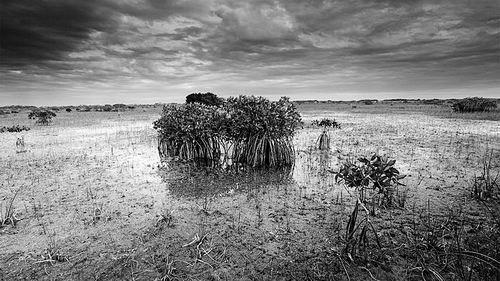 气候变化促使科学家重新思考沼泽管理